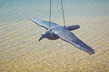 Oase Rabe fliegend